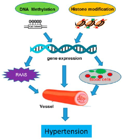 IJMS | Free Full-Text | DNA Methylation and Histone