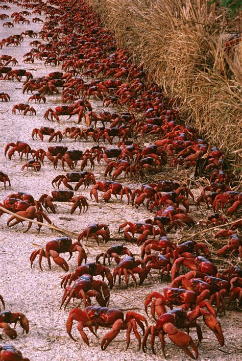 WATCH: Scientists baffled by HUGE swarm of crabs where