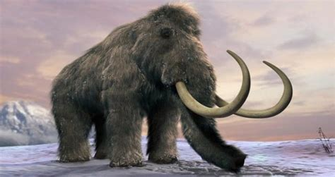 Harvard Scientists Plan To Resurrect Woolly Mammoth By 2019
